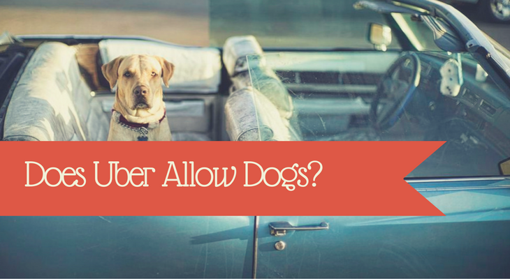 does uber allow dogs?